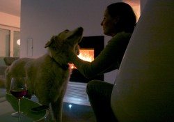 DSA 12 mit Hund